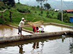 Menjaring Ikan