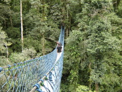 Di Canopy Trail